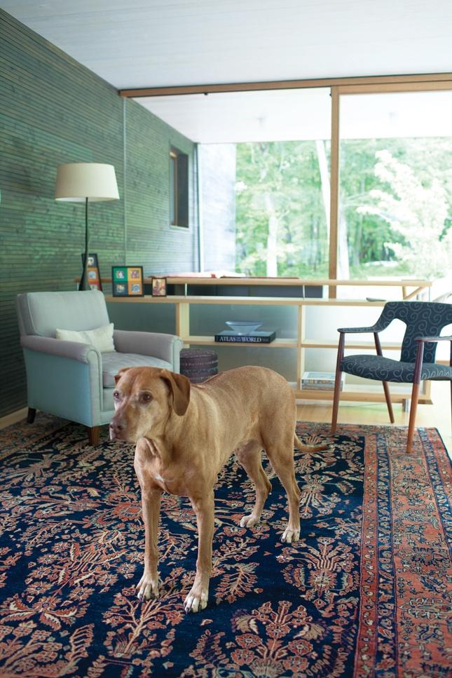 pet standing on persian rug