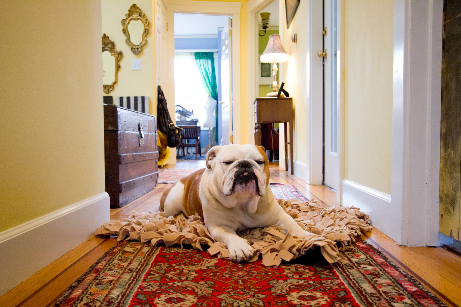rugs for pets